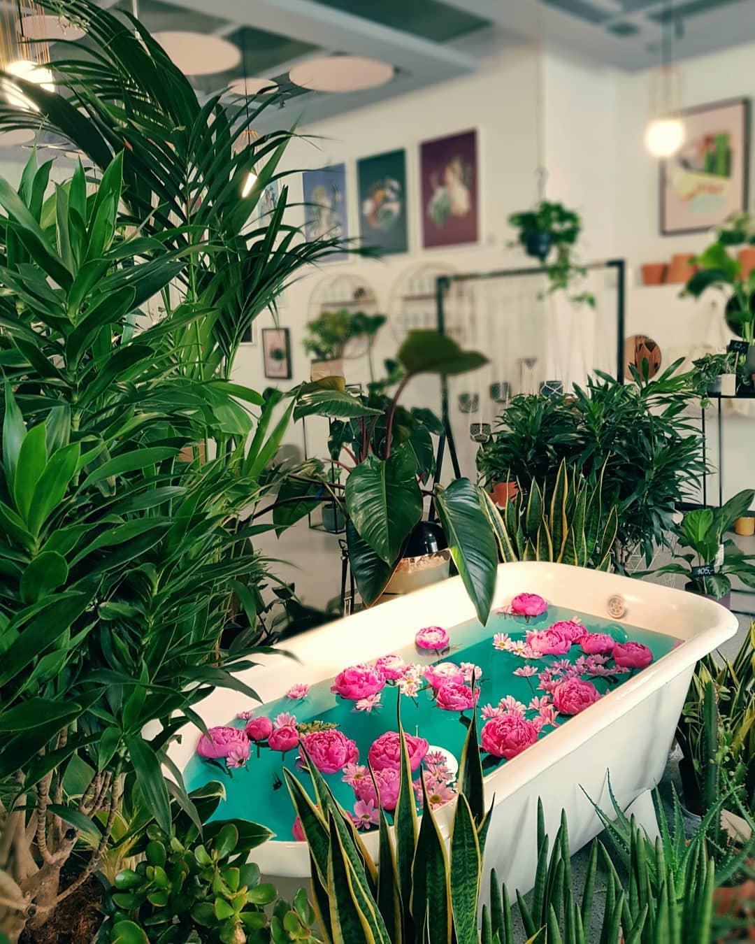 kwiaciarnia-rozkwitnie